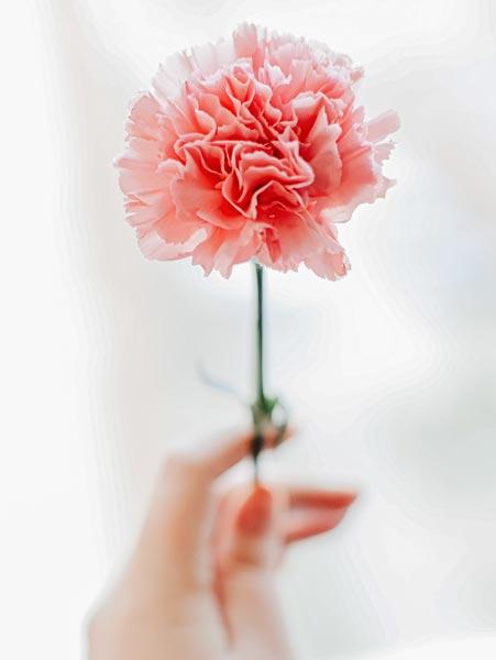 hand holding carnation for mastectomy massage
